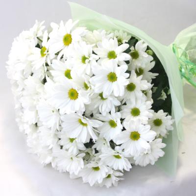 Фото цветов букет ромашек