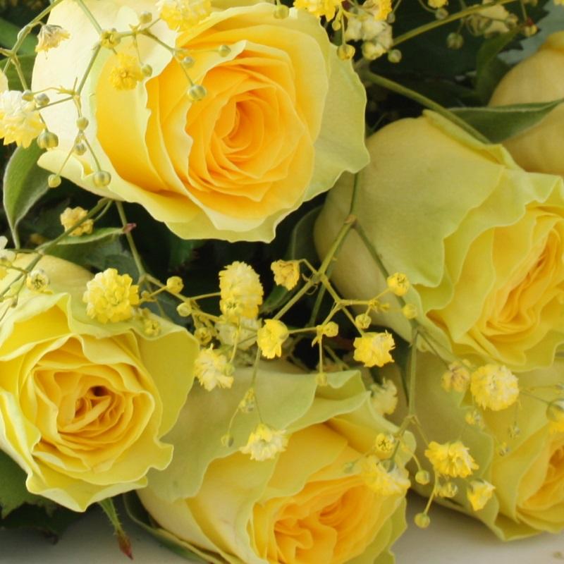 Что означают желтые розы в подарок девушке 21